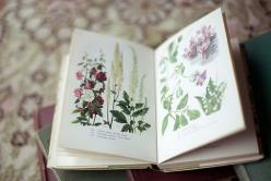 Intricate flower illustrations in my grandpa's old books: Botanical Illustration, Flickr, Inspiration, Art, Posts, Book, Untitled, Flowers, Photo