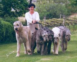 "Irish wolfhounds :} @Kyla: ""Did you know they're the biggest breed of dog? They can stand up to 7 feet tall on their hind legs."" Katie: ""Oh, my goodness! I want one to hug and dance with!"": Gentle Giant, Animals, Stuff, Irish Wolfhound"