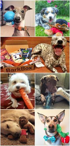 Is your pup's next favorite toy in this month's BarkBox? Probably. When you start a new subscription, your first box ships the next day. So, you don't have to wait to get the pawty started.: