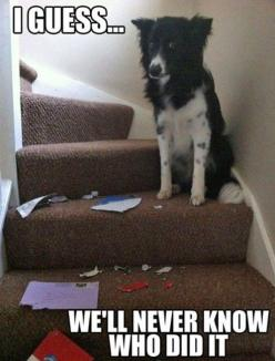 it's a mystery: Animals, Border Collie, Funny Dogs, Pet, Humor, Funnies, Funny Animal, Well