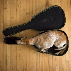 It's like it was made for me!: Fit, Animals, Dogs, Cases, Pets, Funny, Things, Friend, Guitar Case