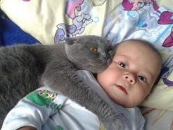 """It's Mine, Don't Touch!!"": Cats, Animals, It S Mine, Cuteness, Funny Picture, Baby, Kids, Classmates, Don T Touch"