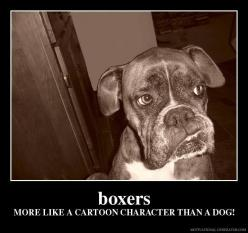 Just have no words...bahahah: Animals, Boxer Dogs, Cartoon Characters, Funny, So True, Boxers, Fur Babies, Boxer Babies