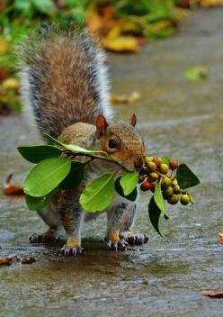 ♥ ...just today we got to watch the little squirrel that comes by our suburban backyard find the acorns I hit in the tree branches for him, and he went and buried it under one of our crepe myrtle trees...carefully patting the soil when he was done.  Sweet