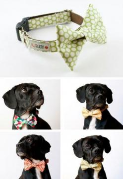 @Kim Schubert I didn't know jack was a so fashionable: Dogs, Dog Collars, Bow Ties, Pet, Bowties, Puppy, Animal