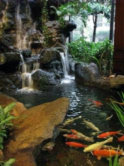 Koi garden pond with waterfall.: Water Gardens, Waterfalls, Water Features, Koi Fish, Koi Ponds, Garden Ponds, Oahu Hotel