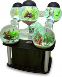 Labyrinth Aquarium. Really Cool. Really expensive.: Ideas, Stuff, Dream, Fish Tanks, Fishtanks, Pet, House