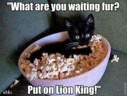 Leeza totally watches Disney movies with me! And she's a popcorn eater!: Funny Animals, Funny Cats, Crazy Cat, Lion King, Movie Night, Kitty
