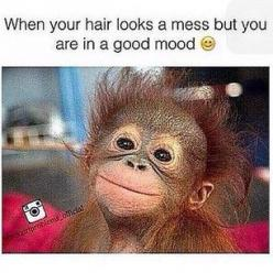 Like this pic ? See more on my Pinterest  : @theylovecyn_: Crazy Hair, Good Mood, Well Smile, Messy Hair, Who Cares, My Life, So Happy, Monkey, Haha So True