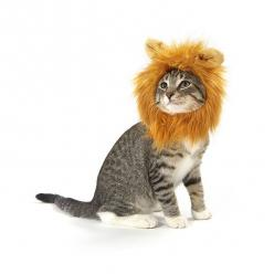 Lion Cat Costume: Boogie Cat, Halloween Costumes, Cat Things, Lion Cat, Lion Costume, Cat Costumes, Things Cats, Products, Cat Apparel