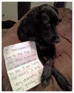 "LOL... look at that face, he's already planning the next ""drop"".: Animals, Dog Shaming, Pet, Funny, Funnies"