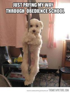Lol this is so funny :] @Chelsea Rose Birdsall @gray + gold design { interior design } Holbrook @Sandra Pendle Crabtree: Pole Dancing, Animals, Dogs, Obedience School, Stuff, Pet, Funny, Funnies