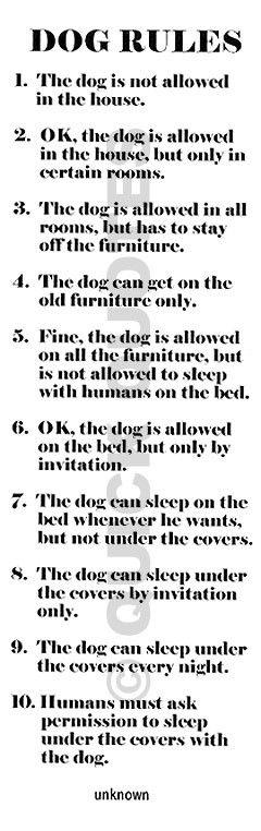 LOL! This is totally Petey. We haven't made it passed #6 yet, but Pete is still trying!: Pet, Truth, Dog Rules, My Life, Funny, So True, Animal