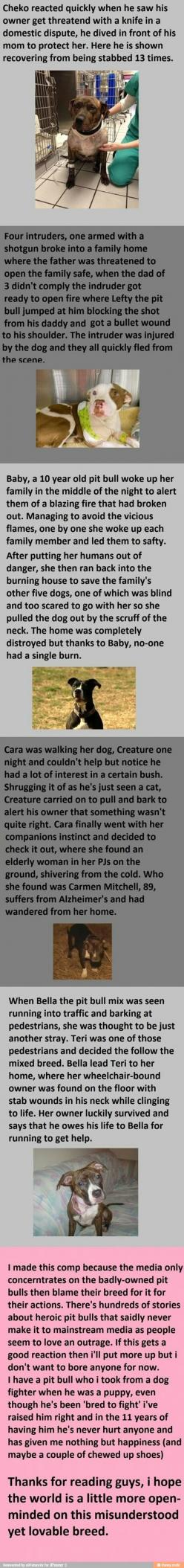 Lots of spelling errors in this, but super sweet nonetheless. Dogs are amazing.: Amazing Stories, Pitt Bulls, Heart Of Gold, Hero, Dog, Pittbull, Animal