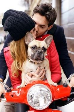 Love French Bulldogs: Kiss, Animals, French Bulldogs, Engagement Photos, Frenchbulldog, Engagement Picture, Couple, Frenchie