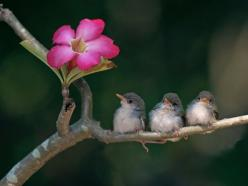 Love that little bird on the end who's looking at the flower.  :D: Animals, Sweet, Nature, Little Birds, Beautiful Birds, Photo, Flower