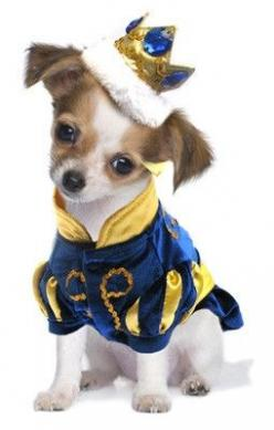 Majestic Prince Charming two piece Dog Costume with Bejeweled Crown Headpiece. Color Royal Blue. Shown on Dog.: Prince Charming Costume, Dogs, Dog Costumes, Pet Costumes, Animal, Halloween