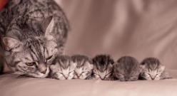 Mama and her babies: Animals, Sweet, Mothers, Pets, Cats And Kittens, Chat, Baby, Photo