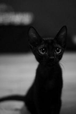 Meow!: Kitty Cat, Animals, Black Kitty, Black Cats, Pet, Black Kittens, Baby, Blackcat, Eye