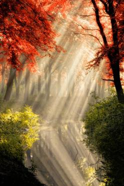 "Miks' Pics ""Nature Scenes lll"" board @ http://www.pinterest.com/msmgish/nature-scenes-lll/: Photos, Nature, Beautiful, Forest, De Goor, Place, Light"