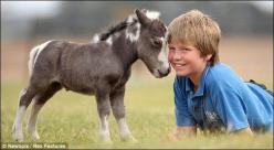 Miniature horses are friendly and interact well with people. For this reason they are often kept as family pets, though they still retain natural horse behavior, including a natural fight or flight instinct, and must be treated like an equine, even if the