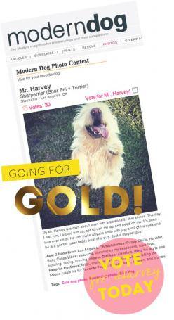 "modern dog magazine ""dog of the week"": Dogs, Cute Pets, Magazine Dog"