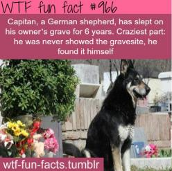MORE OF WTF-FUN-FACTS are coming HERE  funny and weird facts ONLY: Wtf Facts, Dogs, Wtf Fun Facts, Weird Facts, Funny, Interesting Facts, Funfacts, Wtffunfact, Random Facts