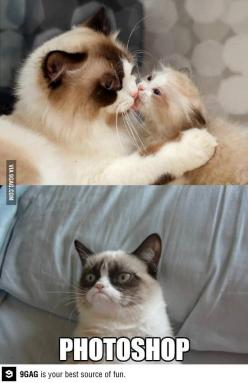 Must be photoshopped: Cats, Grumpycat, Funny Stuff, Humor, Grumpy Cat, Photoshop, Animal