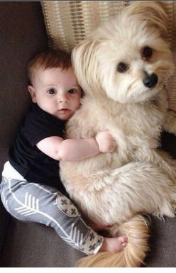 Not exactly a stuffed toy: Babies, Animals, Dogs, Friends, Adorable, Puppy, Kids