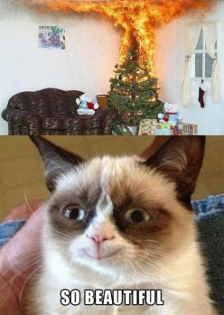 not so grumpy cat - why do i laugh so hard at this: Cats, Grumpycat, Funny Stuff, Humor, Smile, Grumpy Cat, Animal