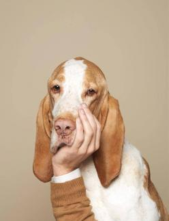 obsessed with this Luke Stephenson pic #bassethound: Photos, Idea, Animals, Dogs, Pets, Funny, Basset Hound, Luke Stephenson, Photography