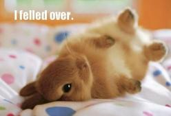 oh my gosh... too adorable.: Rabbit, Animals, So Cute, Pet, Baby Bunnies, Baby Animal, Adorable, Things