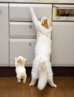 Oh no. Farrrrrrr too cute to handle. #cats: Cats, Animals, Mother, Pet, Funny, Baby, Kittens, Kitty, Photo