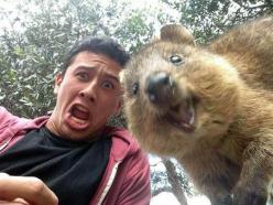 OMG!!!   I so want one of these! Meet the Quokka, the happiest animal on Earth. These are the CUTEST photos you'll see all day!: Picture, Selfies, Animals, Stuff, Happiest Animal, Funny, Funnies, Photo
