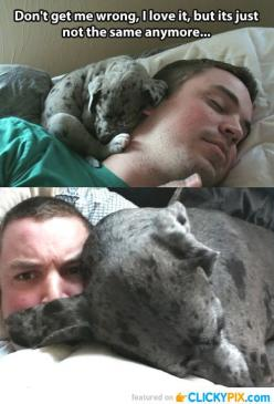Omg look at all of them!!! I think I peed a little...: Animals, Dogs, Stuff, Pet, Puppy, Funnies, Funny Animal, Great Dane
