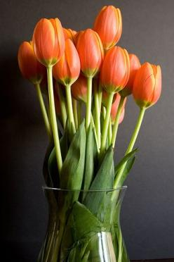 orange tulips always make me happy: Favorite Flowers, Color, Things, Flowers, Garden, Tulips My, Floral