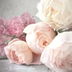 pale pink peonies: Wedding, Beautiful, Roses, Pink, Flowers, Garden, Floral, Peonies