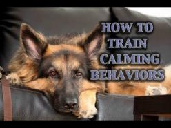 Parenting for Puppies! How To Train Calmness In Dogs (and many more great video tutorials!): Doggie, Dog Training Videos, Animal Training, Dogs, Train Calmness, Training Positive, German Shepherd, Video Tutorials, Puppy Training