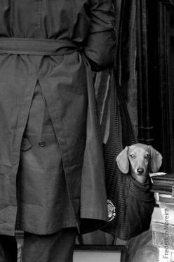 Paris |  Frederico Moreira dachshund, best purchase in the bag.: Paris, Dogs Pets, Weenie, Doxies, Covert Doxie, Black, Animal