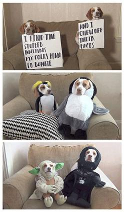 Paws in crime…this has to be the best one yet. YODA. This is just cute.: Giggle, Dog Shaming, Funny Dogs, Funny Pictures, Beagle, Animal Shaming, So Funny, Pet Shaming