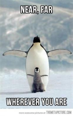 Penguin Titanic…this shouldn't be as funny as I think it is: Animals, Nature, Happy Feet, Creatures, Penguins, Photo, Birds