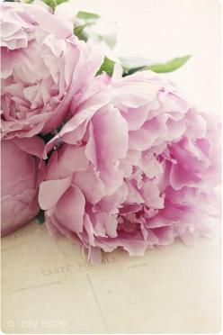 peonies...my favorite. reminds me of when I was a child on Arbor Road and would cut them in mid-june to take to my teachers.: Rose, Beautiful Flowers, Bloom, Beauty, Garden, Pink Peonies, Flower, Favorite Flower