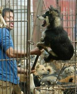 People like this should be eliminated from the world---WATCH THE VIDEO AND SIGN THE PETITION! HELP TO END THIS MADNESS! http://www.theperfectworld.com/petitions/item/27-let-us-help-soi-dog-to-end-the-dog/cat-meat-trade Let us help SOI DOG to end the dog/c