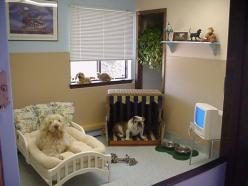 pet rooms | ... with Dog's hair.: How to Transform your spare room into a Dog Room: Doggie Bedroom, Dog Bedroom Ideas, Dog Bedrooms, Dog Room Ideas, Dog Rooms, Doggy Bedrooms, Bedroom For Dogs, Pet Rooms, Animal