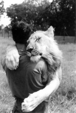 Photo: Big Hug, Animals, Big Cats, Friends, Pet, Things, Photo, Bigcat, Lion Hug