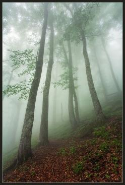 photo by Evgeni Dinev: Photos, Evgeni Dinev, Forest Photograph, Nature Photography, Landscape, Foggy Mists, Beautiful Nature