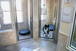 Photo gallery: Veterinary housing solutions to show cats and dogs the love - Hospital Design: Pets, Glass, Pet Resort, By, Cats And Dogs, Photo, Light, Hospital
