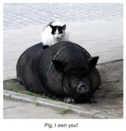 Pigs and cats... both smarter than people give them credit for: Cat Dog Friends Gang, Animals, Critter, Interspecie Friendships, Pigs, Pets, Unlikely Animal Friends, Animal Friendships, Cats Friends