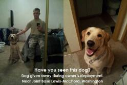 PLEASE HELP THIS SOLDIER FIND HIS DOG!!! PLEASE SHARE FAR AND WIDE. WE OWE IT TO THIS SOLDIER TO HELP HIM OUT.  https://www.facebook.com/photo.php?fbid=640546425980308=a.480395975328688.115466.480392341995718=1: Animals, Dogs, Soldiers, Friends, Afghanist