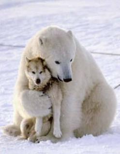 polar bear & dog: Animals, Polar Bears, Dogs, Friends, Pet, Funny, Things, Polarbears